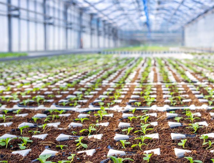 Wachstumsfelder und Innovationsideeen in der Landwirtschaft